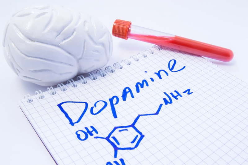 This drug increases the amount of dopamine in the brain and causes a euphoric high